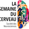 La SEMAINE DU CERVEAU, du 11 au 17 mars 2019